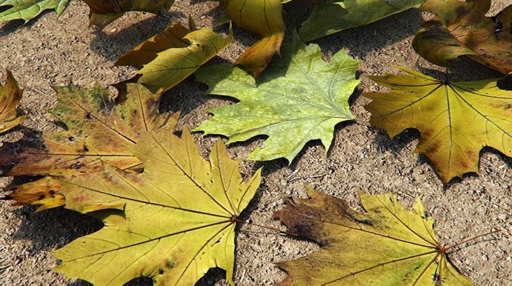 Free 3D Leaves Models by Sergio Mereces | 3db3 com - Free 3D Model