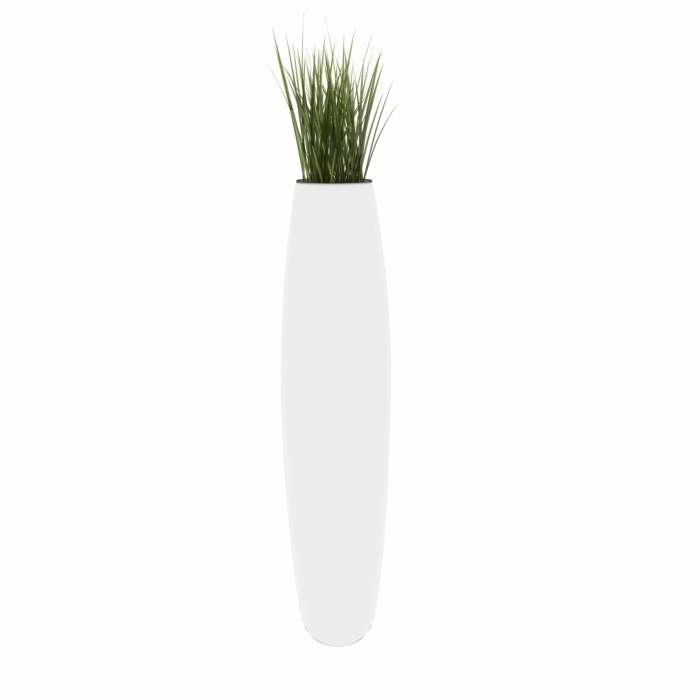 White Vase Plant