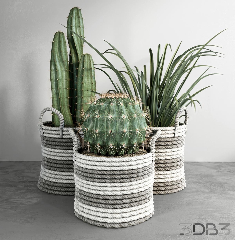 Cactus model set